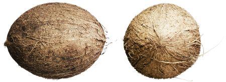shelled: Cocos isolated on white background