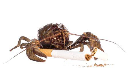 crayfish isolated on white background Stock Photo - 4016117