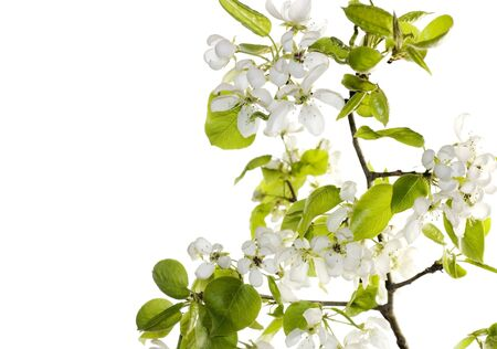Beautiful flower branch photo