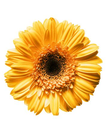 Beautiful Daisy Flower Stock Photo - 4066277