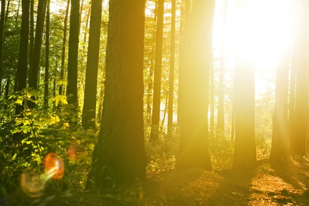peace and quiet: Beautiful solar beams in a quiet wood.