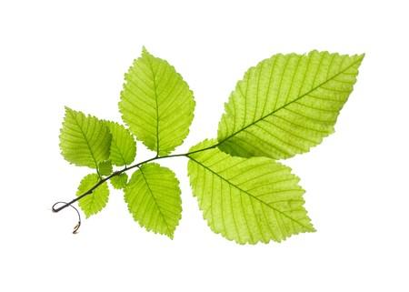 Leaf Stock Photo - 4409835