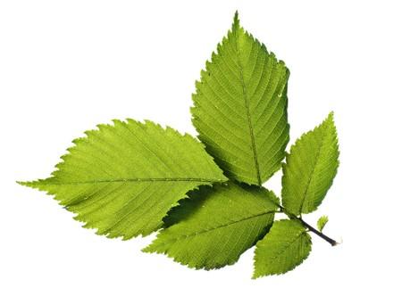 Leaf Stock Photo - 4409900