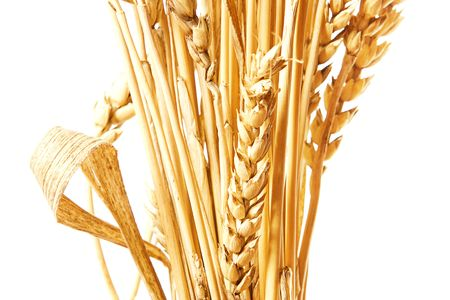 Golden wheat isolated on a white background. Stock Photo - 5255201