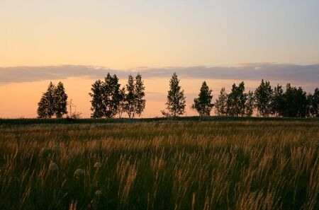 Summer landscape in the evening. photo