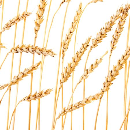 Golden wheat isolated on a white background. Stock Photo - 5255247