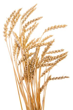yellow flour: Golden wheat isolated on a white background. Stock Photo