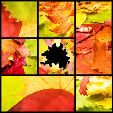 collage of various autumn leaves Stock Photo - 5319343