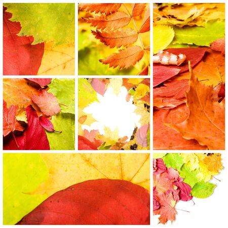 collage of various autumn leaves photo