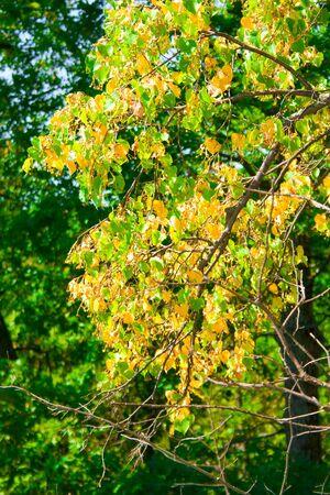 Autumn free tree... Stock Photo - 5389165