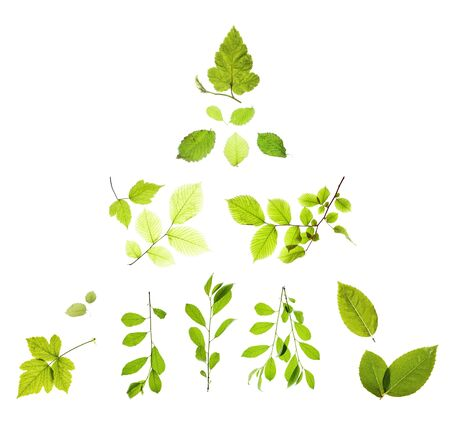 leaves isolated on white background Stock Photo - 5389050
