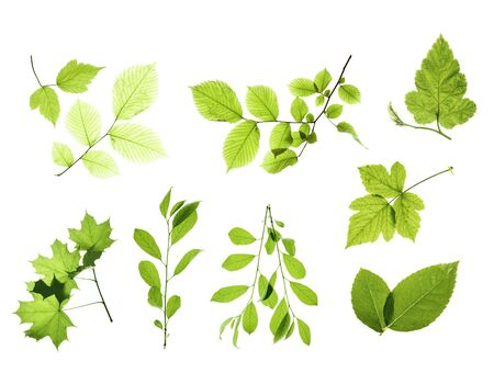 leaves isolated on white background Stock Photo - 5388888