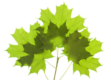 leaves isolated on white background Stock Photo - 5389014
