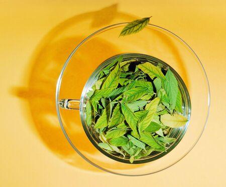 Green tea concept photo