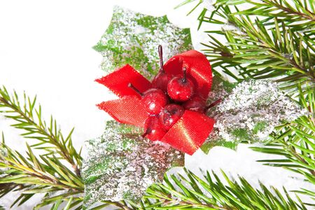 Close-up of fir tree branch and snow photo