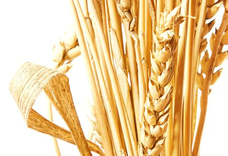 Golden wheat isolated on a white background. Stock Photo - 5632424