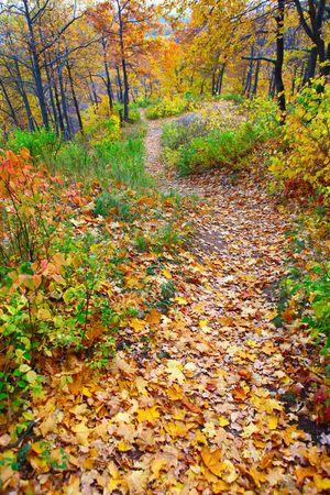 woodland path: autumn forest path