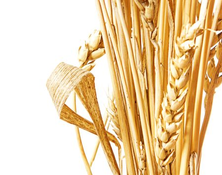 Golden wheat isolated on a white background. Stock Photo - 6034160