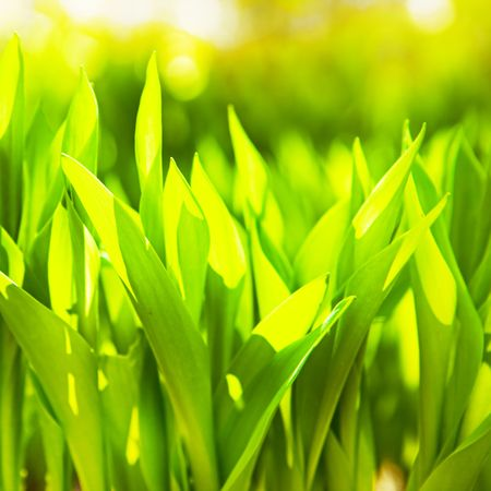 background of the green grass Stock Photo - 6034710