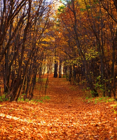 mn forest scene, road in the forest