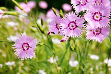 Beautiful flowers close-up.