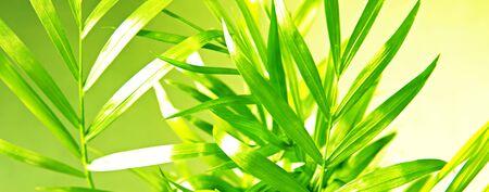 Plant Stock Photo - 6034958