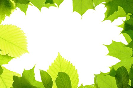 leaves frame isolated on white background Stock Photo - 6034609
