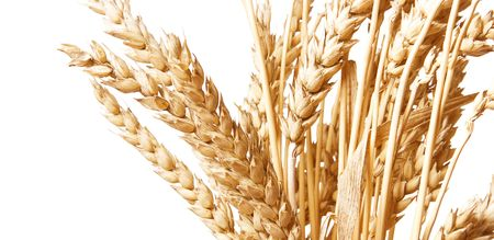 Golden wheat isolated on a white background. Stock Photo - 6094831