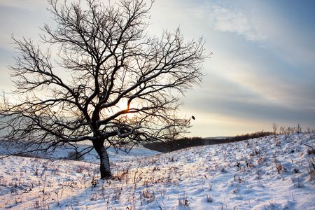 one tree in winter morning  Stock Photo