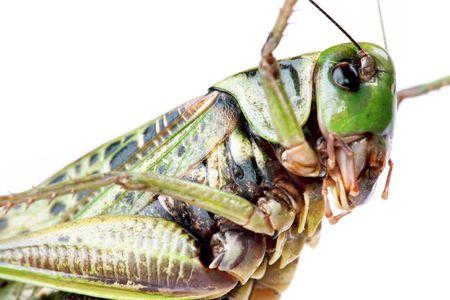 large beetle isolated on white background photo