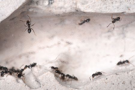 formic: Ants life, perfect ants house.