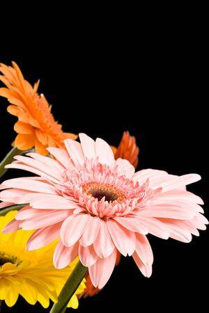 Daisy isolated on black background photo