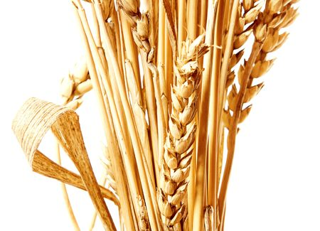 fascicle: Golden wheat isolated on a white background. Stock Photo