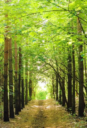 forest path: forest landscape