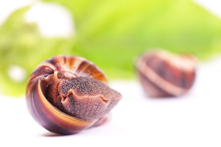 Snails snack isolated on white background. Stock Photo - 6639416