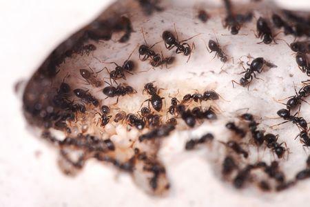 formic: Vida de las hormigas, casa de las hormigas perfecto.  Foto de archivo