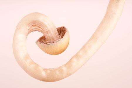 close-up of mushrooms photo