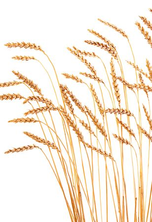 Golden wheat isolated on a white background. Stock Photo - 6639507