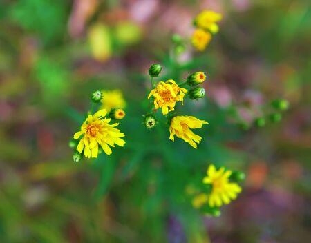 unbeautiful: unbeautiful flowers Stock Photo