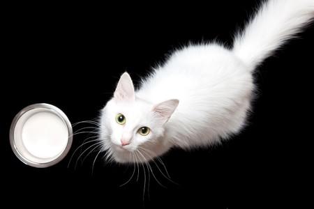 white cat & milk Stok Fotoğraf