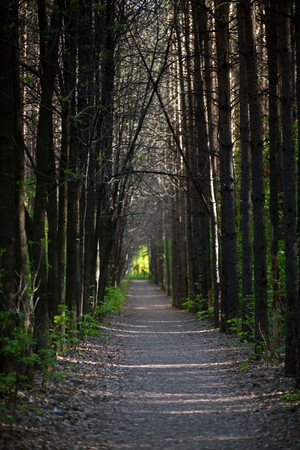 forest path in the evening photo