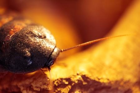 Beetle macro, shallow dof. photo
