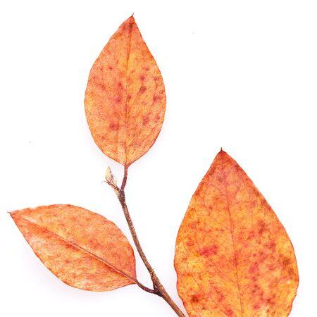 close-up photo of autumn leaf photo