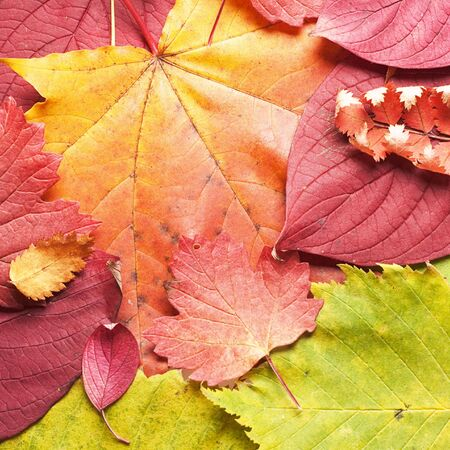 autumn leaves close up background  photo