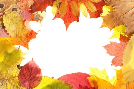 autumn leaves isolated on white background Stock Photo - 7495916
