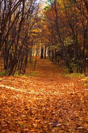 Path in the autumn forest. Stock Photo - 7593622