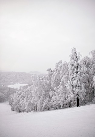 Winter trees covered with fresh snow. Stock Photo - 7593167