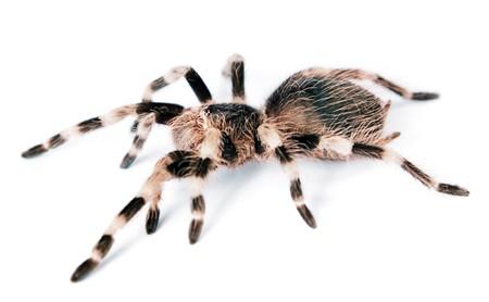 거미 흰색 배경에 고립입니다.