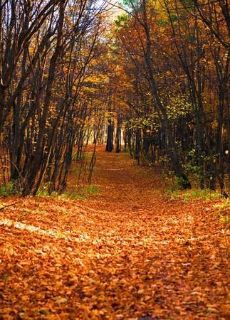 autumn coming Stock Photo - 7664318