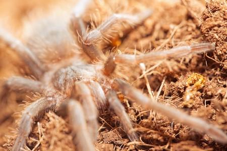 arachnophobia animal bite: spider